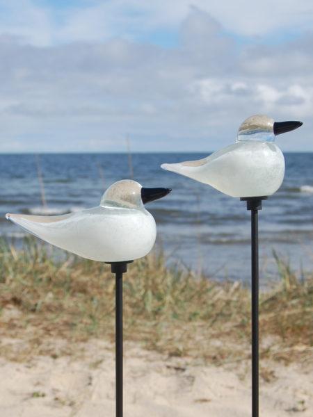 vit fågel