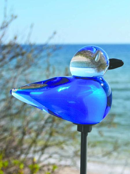 blå fågel